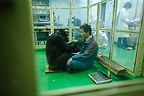 Research on the cognitive abilities of chimpanzees Japan