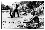 Mahout and his elephant near a river in Kandy Sri Lanka (Asian elephant)
