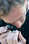 Arnaud Lyet inspects a Orsini's Viper under the microscope
