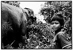 Young keeper and into the forest Elélaphant Cambodia (Asian elephant)