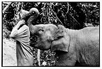 Elephant playing with his hat mahout Thailand (Asian elephant)