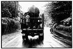 Transport of Asian Elephant in truck Sri Lanka (Asian elephant)