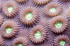Detail of a brain coral, Mayotte, Comoro Islands, Indian Ocean