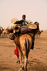 Nomad with his Camel in the Zakouma NP Chad (Dromedary)