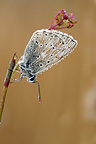Butterfly cover of morning dew on the Causse Martel