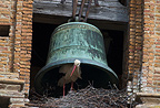 White Stork nesting under cathedral bell Alfaro Spain (White Stork)