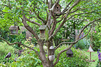 Breeding cages in a lilac in a garden
