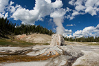 Lonely Star Geyser Yellowstone NP USA�