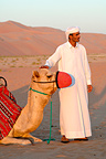 Camel man and muzzled camel, Liwa oasis, Abu Dhabi. This district, also called