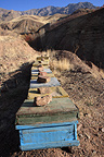 Hives in the mountains Alamut  in Iran