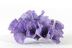 Purple coral in a studio