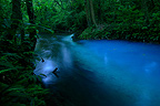 The Rio Celeste (river) in the PN Tenorio Volcano in Costa Rica
