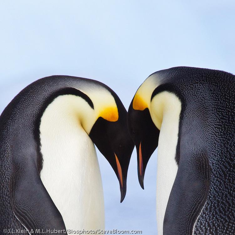 Animal Couples